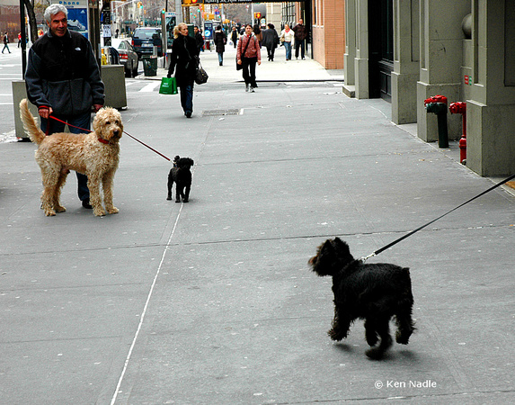 Three dogs on 5th Ave
